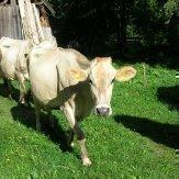 Bauernhofurlaub Südtirol - Kiechlhof